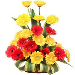 Majestic Table Top Arrangement of Yellow N Red Gerbera Flowers