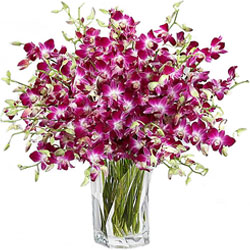 Lovely Glass Vase Display of Orchids