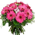 Urbane Bunch of Pink Gerberas to Agol