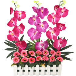 Cherished Long Lasting Orchids and Flower Garden