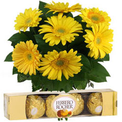 Order Online Yellow Gerberas with Ferrero Rocher Chocolates