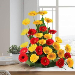 Pretty Arrangement of Fresh 30 Assorted Gerberas