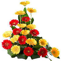 Buy Arrangement of Gerberas Online
