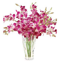 Send Orchids in a Glass Vase Online