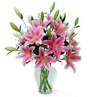 Expressive Lilies in Pink Color with Vase