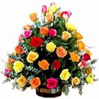 Magnificent Presents of Colourful Roses<br>