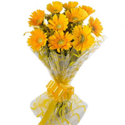 Blooming Bunch of Yellow Shade Gerberas