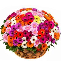 Wonderful Basket Arrangement of 150 Assorted Gerberas