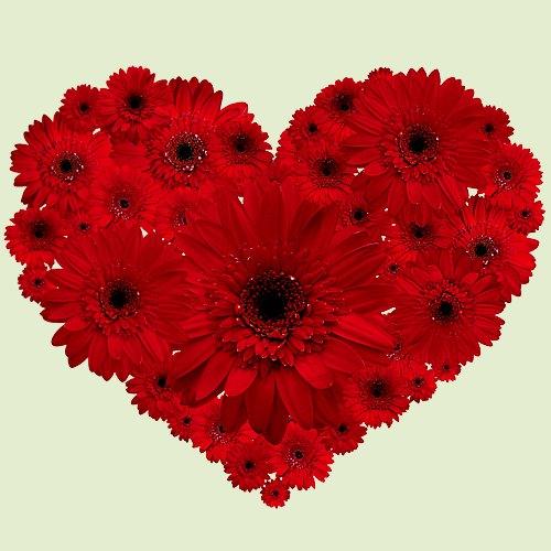 Shop Online Red Gerberas in Heart Shape Arrangement