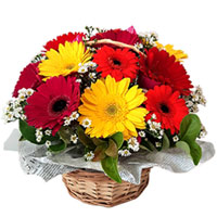 Luminous Basket of Mixed Gerberas