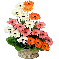 Send Online Bouquet of Mixed Gerberas