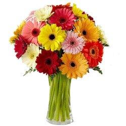 Expressive Multi-Colored Gerberas in a Glass Vase