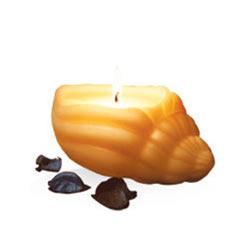 Remarkable IRIS Sea Shell Candle Set