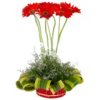 Breathtaking Designer Arrangement of 7 Gerberas with Hypnotic Wishes